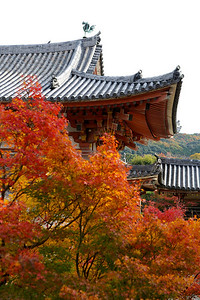 Byodo-in Temple, Japanese World Cultural Heritage  Phoenix Hall section from back with autumn foliage