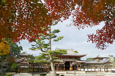 Byodo-in Temple at Uji City, Japan.  Framed with red and orange Momiji (autumn foliage)