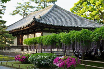 Byodo-in Temple with hanging Wisteria and Azalea  Japanese World Cultural Heritage in Uji City south of Kyoto