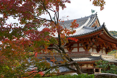 Byodo-in Temple from West Side with Autumn Foliage  Japanese World Cultural Heritage in Uji City,  South of Kyoto