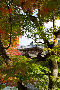 Byodo-in Temple, Section framed with green and red autumn foliage