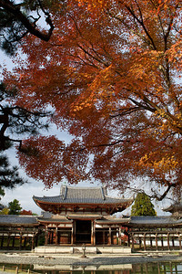Byodo-in Temple seen from Front Side   Framed with red and orange Momiji (autumn foliage)