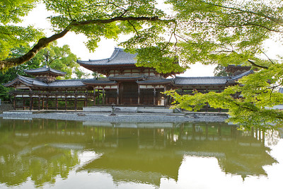 Byodo-in Temple, Green Momiji framing  Japanese World Cultural Heritage in May