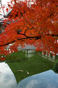 Byodo-in Temple, Phoenix Hall  Reflection framed with red Momiji leaves