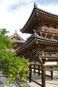 Byodo-in Temple from Side with Citrus Tree  Japanese World Cultural Heritage Buildings in Uji City near Kyoto