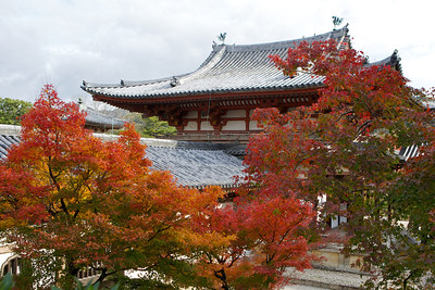 Byodo-in Phoenix Hall from Back with beautiful Autumn Foliage