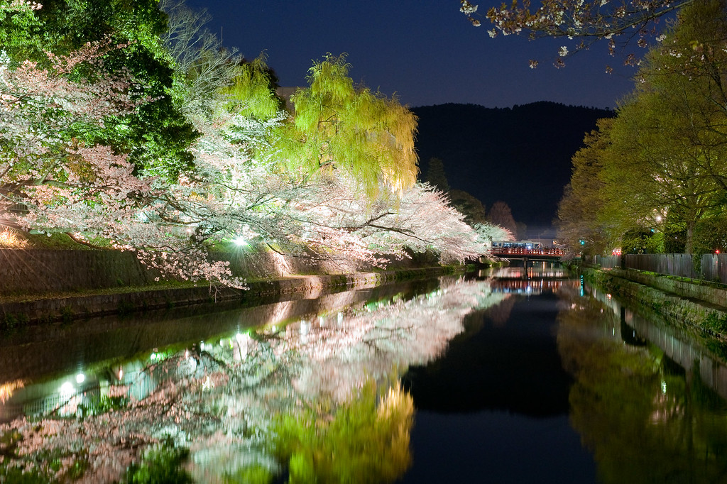 Kyoto's Okazaki-koen Area with illuminated cherry blossoms - image copyright Jeffrey Friedl