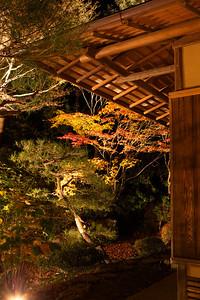Japanese Garden at Temple with Autumn Foliage  Illuminated at Night, in Kyoto