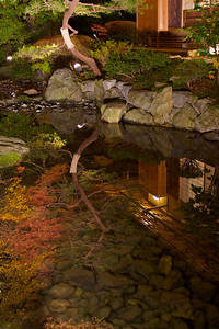 Autumn Foliage reflecting in a Pond