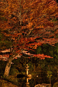 Temple Garden at Chion-in Monastery in Kyoto  With Stone Lantern an Lake, illuminated at Night