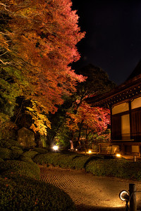Autumn Scene at Chion-in Temple in Kyoto  Light up at Night Time