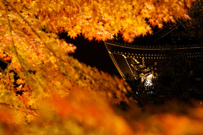 Detail of Golden Temple Rafters at Night  Illuminated with Autumn Foliage
