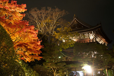 Chion-in Temple at light up time  Evening with Autumn Foliage