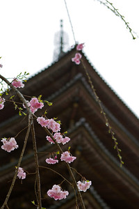 Japanese World Cultural Heritage Temple Daigo Ji in Kyoto  Famous for Cherry Blossoms
