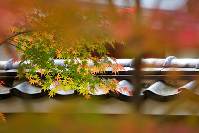 Daitokuji Temple, Kyoto  Detail of Subtemple Hoshunin in Autumn