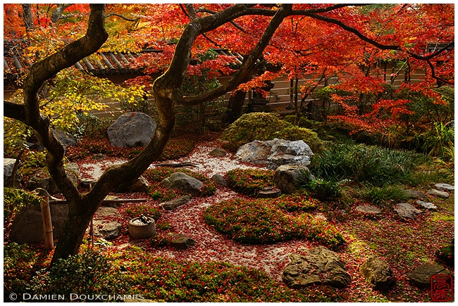 Eikan-do Temple in fall image copyright Damien Douxchamps