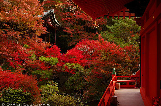 Bishamon-do Fall Foliage: copyright Damien Douxchamps