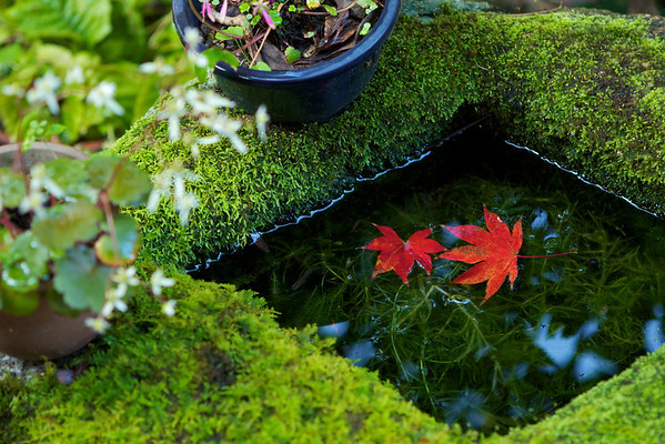 Water Basin at Genko-an Temple, Kyoto in Autumn
