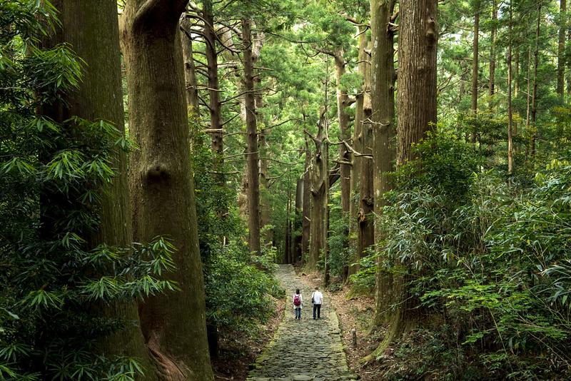 Kumano Kodo in Wakayam. Editorial credit: Basico / Shutterstock.com