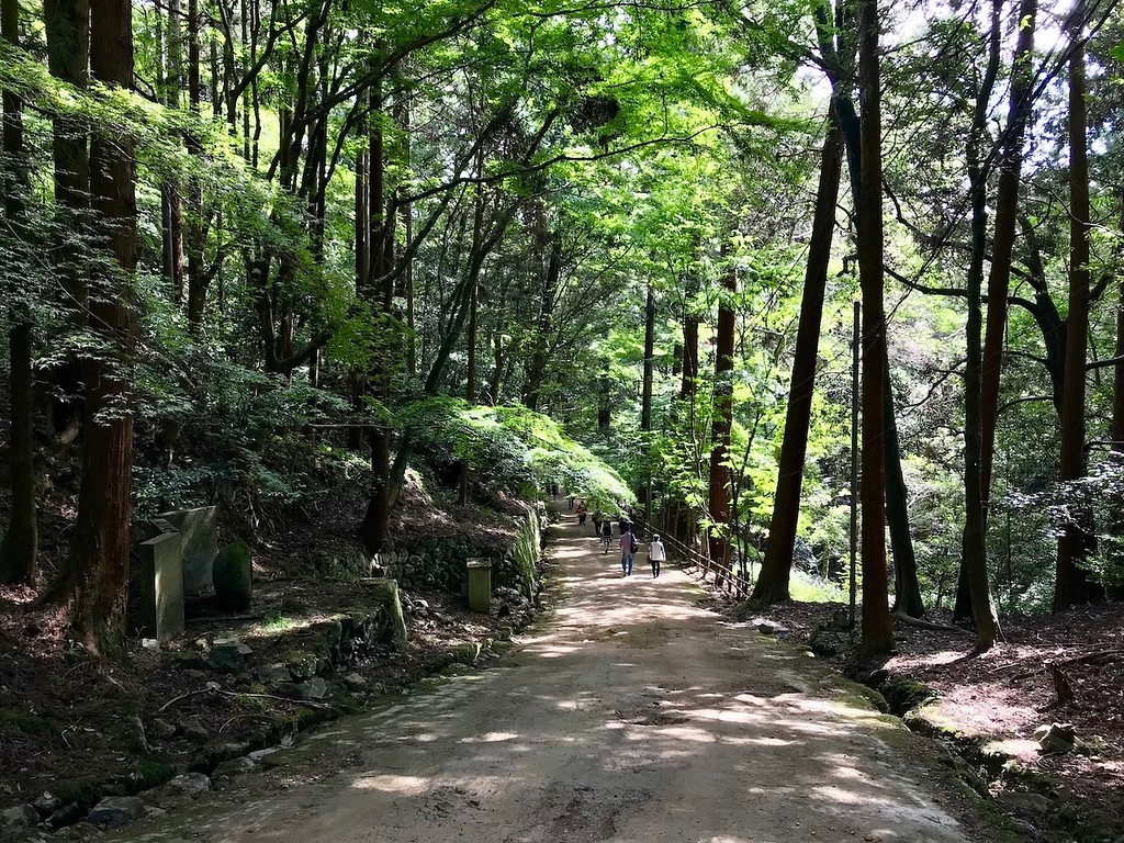 One of the paths on Mt. Shosha.