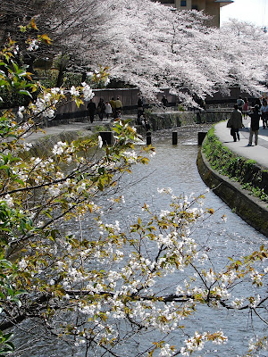 Koto Inn - view of nearby Shirakawa Canal during cherry blossom season