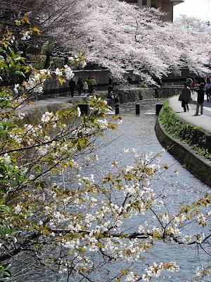 Koto Inn - view of nearby Shirakawa Canal during cherry blossom season