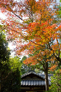 Subtemple of Daitoku-ji Temple in Kyoto: Koto-in  Famous for its Maple Foliage in Autumn