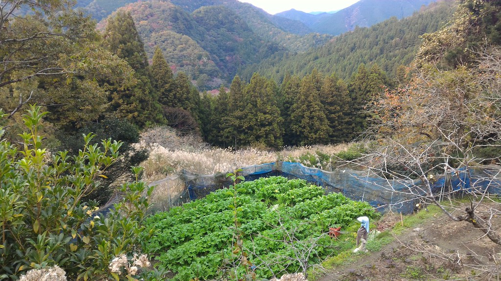 Farm above Chikatsuyu