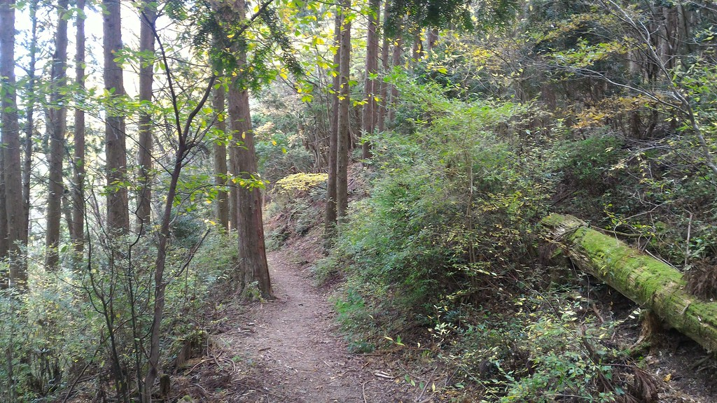Trail above Takahara