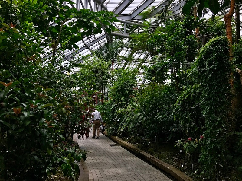 Lush tropical plants surround the walkway in the conservatory.