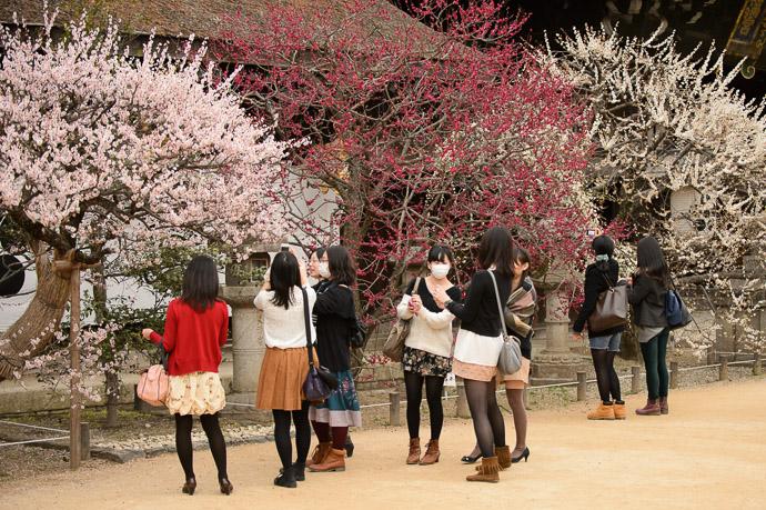 Plum Blossoms - image copyright Jeffrey Friedl