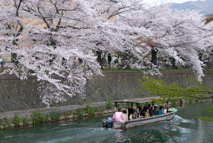 Cherry Blossoms image copyright Jeffrey Friedl