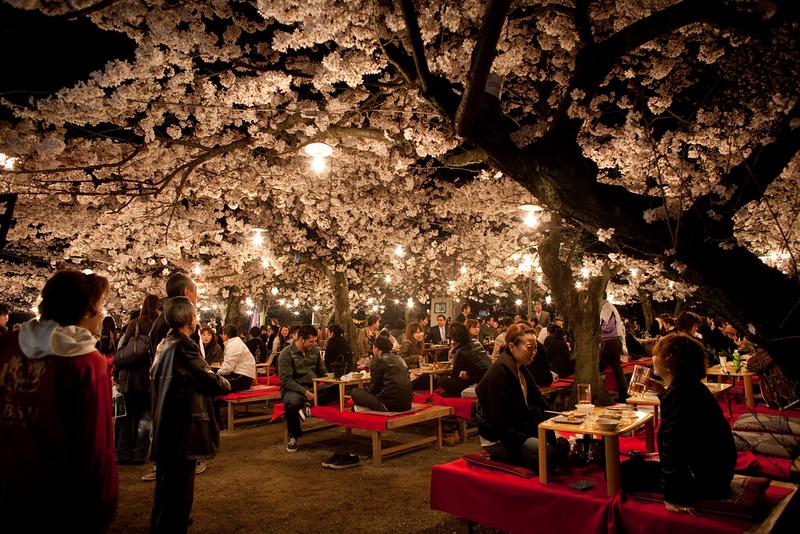 Maruyama-koen Park during cherry blossom season. Editorial credit: littlesam / Shutterstock.com
