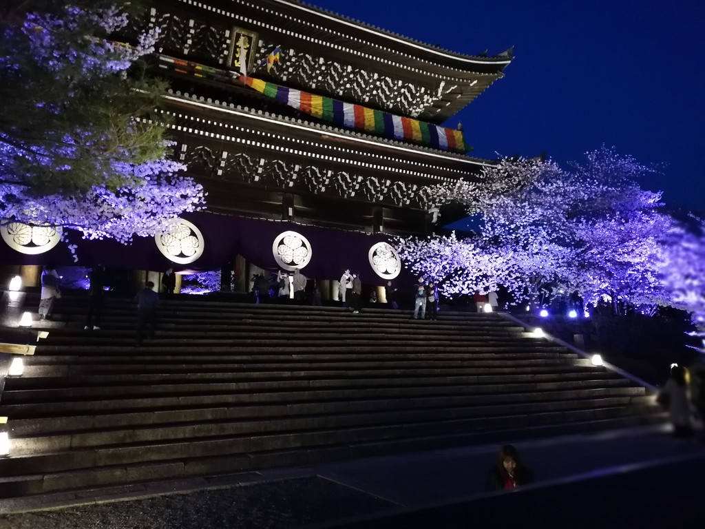 Chion-in Gate during cherry blossom season