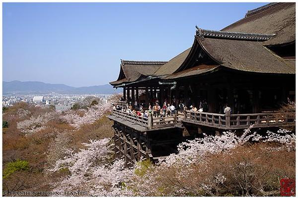 The classic Kyoto shot: Kiyomizu-dera in cherry blossom season image copyright Damien Douxchamps