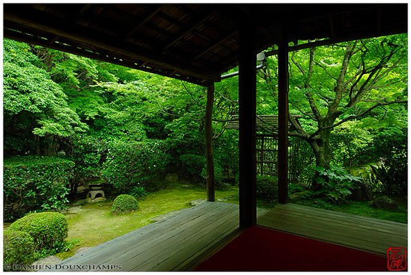 Deep green at Keishu-in Temple image copyright Damien Douxchamps