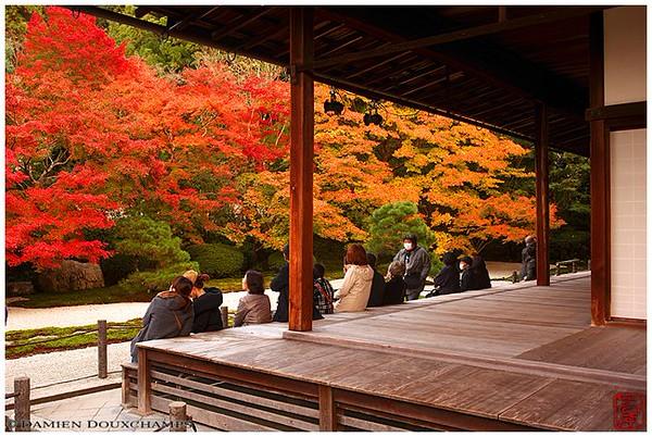 Tenju-an Subtemple at Nanzen-ji in fall plumage image copyright Damien Douxchamps