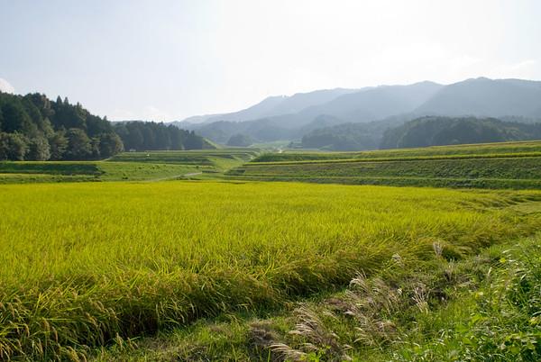 Rice paddies in rural Northern Kyoto image copyright Jeffrey Friedl
