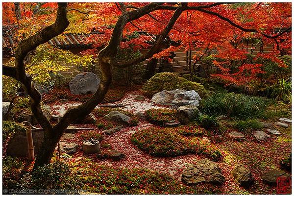Eikan-do Temple: fall foliage central image copyright Damien Douxchamps