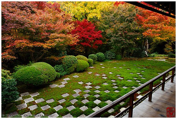 An explosion of color at Tofuku-ji Temple image copyright Damien Douxchamps