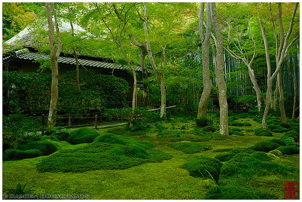 A paradise of moss: Gio-ji Temple image copyright Damien Douxchamps