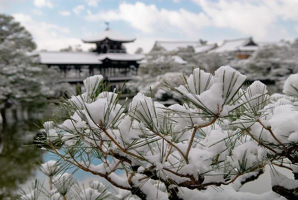 Snow on pine needles behind Heian-jingu Shrine image copyright Jeffrey Friedl