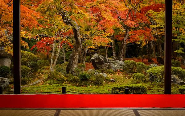 Enko-ji Temple with fiery maple leaves image copyright Jeffrey Friedl