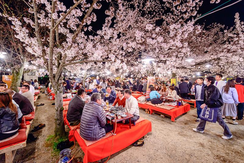 Hanami party at Maruyama-koen Park