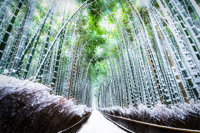 Arashiyama Bamboo Grove under snow