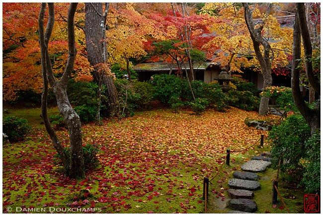 Fallen leaves at Okochi-Sanso Villa : copyright Damien Douxchamps