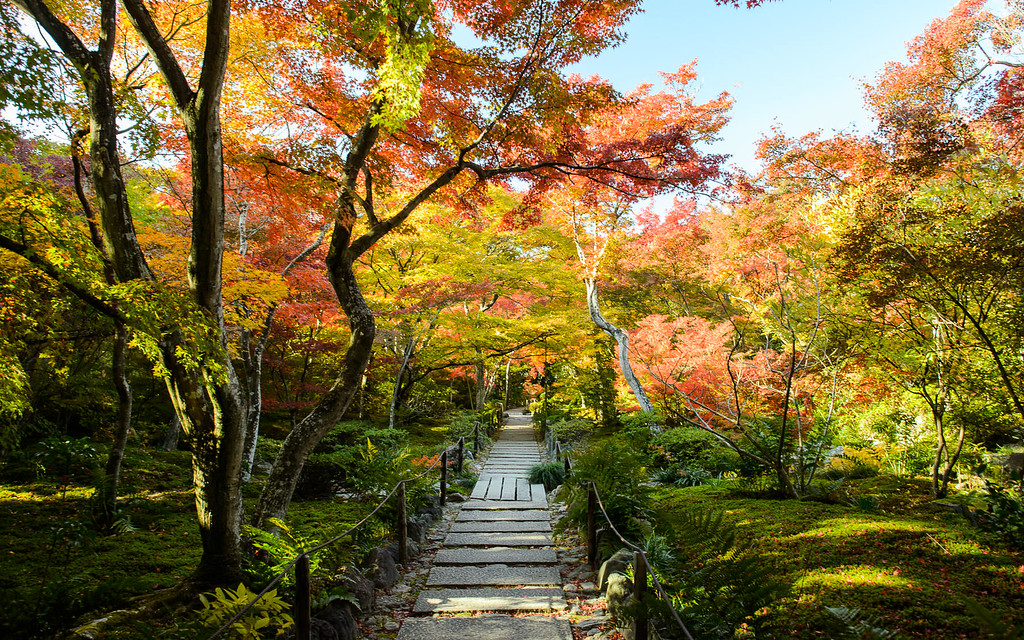 Fall foliage at Hokyo-in Temple  : copyright Jeffrey Friedl