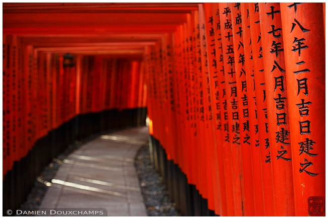 Torii tunnel at Fushimi-Inari Taisha : copyright Damien Douxchamps