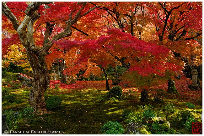 Autumn colors at Enko-ji Temple : copyright Damien Douxchamps