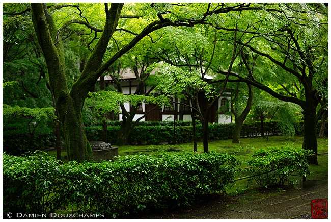 New green at Shinyodo Temple : copyright Damien Douxchamps